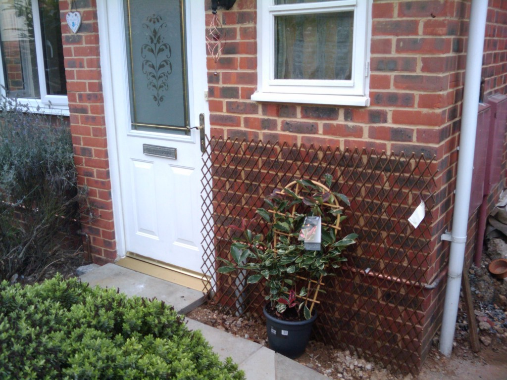 Hiding the copper gas pipes at the front of the house. The plant is an evergreen which apparently loves dry conditions - perfect. Will plant the plant once the building is totally completed. Plus newly painted front door
