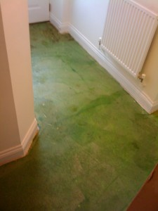Primer painted on to the existing concrete floor