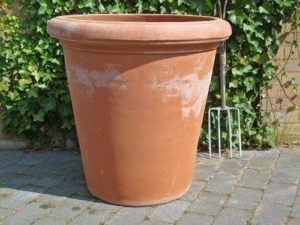 terracotta darkclay camelia pot